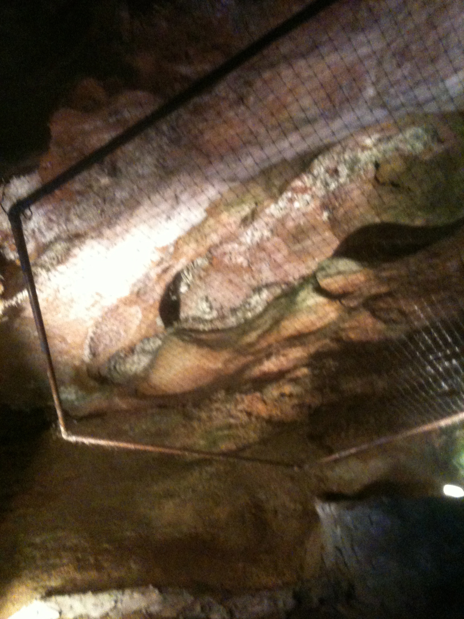 anothodites in the cavern